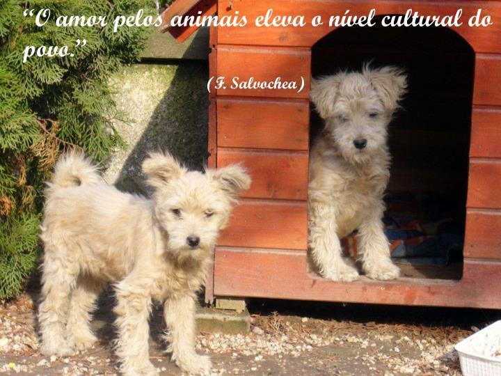 """""""O amor pelos animais eleva o nível cultural do povo."""""""