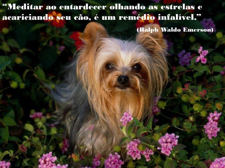 """""""Meditar ao entardecer olhando as estrelas e acariciando seu cão, é um remédio infalível."""""""