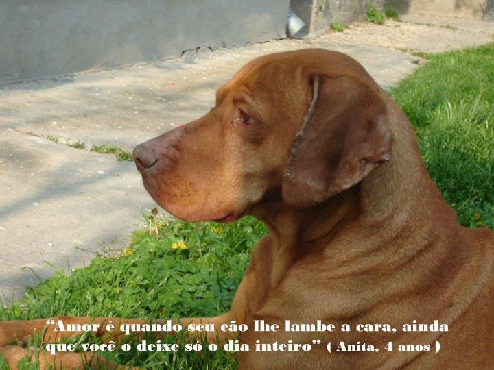 """""""Amor é quando seu cão lhe lambe a cara, ainda que você o deixe só o dia inteiro"""""""