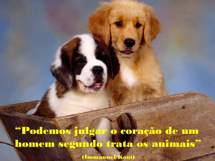 """""""Podemos julgar o coração de um homem segundo trata os animais"""""""