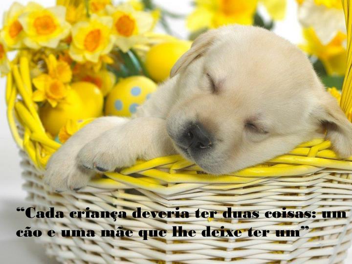 """""""Cada criança deveria ter duas coisas: um cão e uma mãe que lhe deixe ter um"""""""