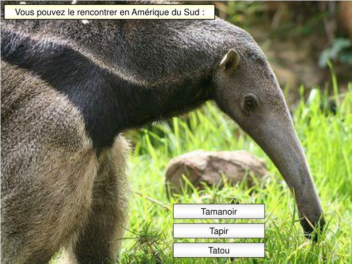 Vous pouvez le rencontrer en Amérique du Sud :
