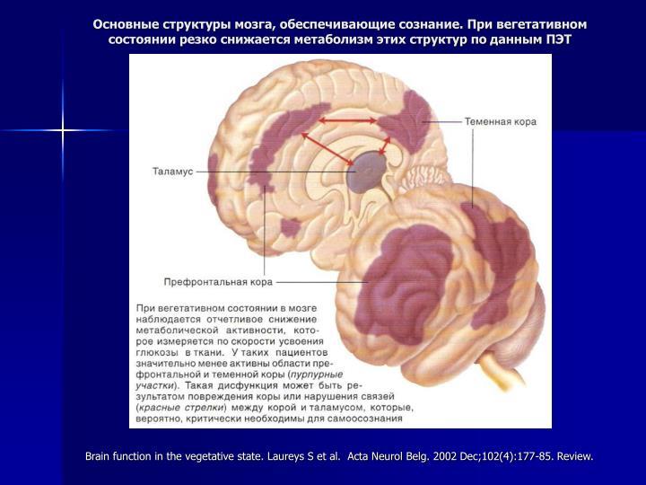 Основные структуры мозга, обеспечивающие сознание. При вегетативном состоянии резко снижается метаболизм этих структур по данным ПЭТ