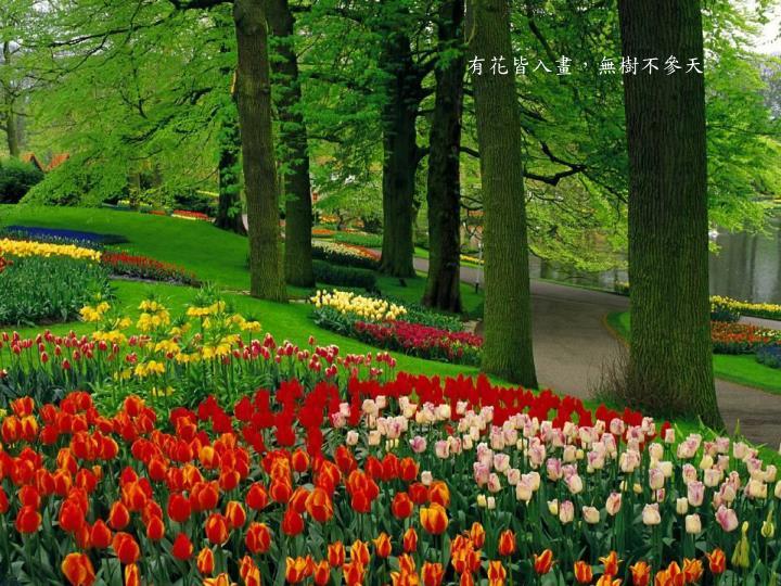 有花皆入畫,無樹不參天