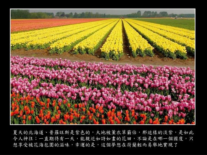夏天的北海道、普羅旺斯是紫色的,大地被薰衣草霸佔,那迷樣的淡紫,是如此令人神往;一直期待有一天,能親近如詩如畫的花田,不論是在哪一個國度,只想享受被花海包圍的滋味,幸運的是,這個夢想在荷蘭輕而易舉地實現了