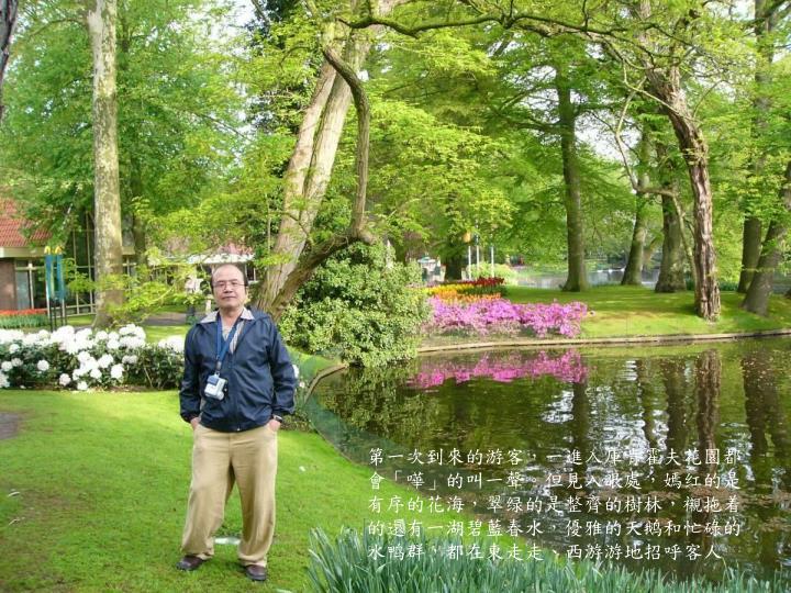 第一次到來的游客,一進入庫肯霍夫花園都會「嘩」的叫一聲。但見入眼處,嫣红的是有序的花海,翠绿的是整齊的樹林,襯拖着的還有一湖碧藍春水,優雅的天鹅和忙碌的水鸭群,都在東走走、西游游地招呼客人