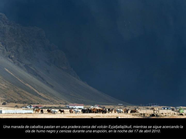 Una manada de caballos pastan en una pradera cerca del volcn Eyjafjallajkull, mientras se sigue acercando la ola de humo negro y cenizas durante una erupcin, en la noche del 17 de abril 2010.