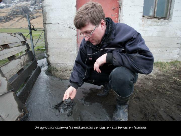 Un agricultor observa las embarradas cenizas en sus tierras en Islandia.