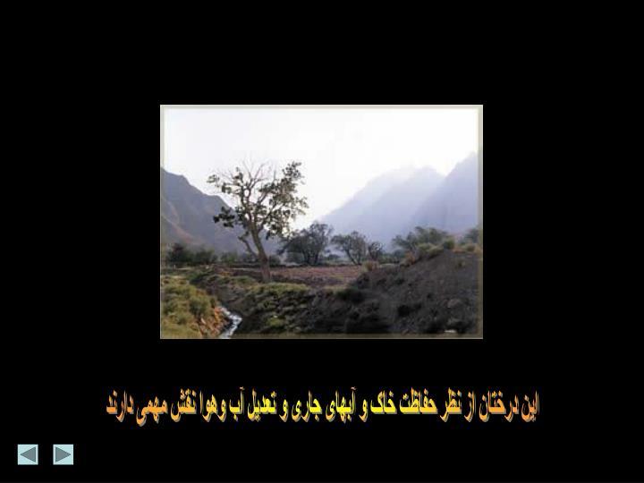این درختان از نظر حفاظت خاک و آبهای جاری و تعدیل آب وهوا نقش مهمی دارند