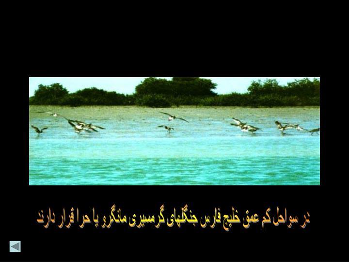 در سواحل کم عمق خلیج فارس جنگلهای گرمسیری مانگرو یا حرا قرار دارند