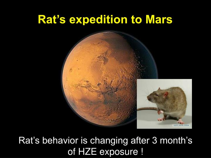 Rats expedition to Mars