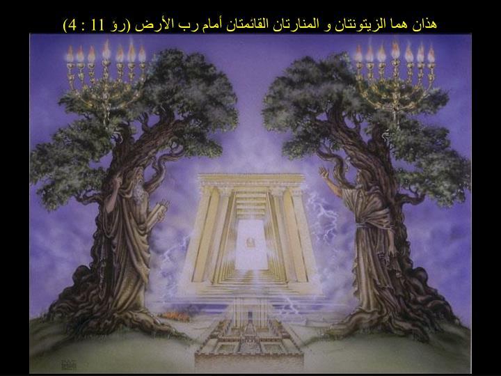 هذان هما الزيتونتان و المنارتان القائمتان أمام رب الأرض (رؤ 11 : 4)
