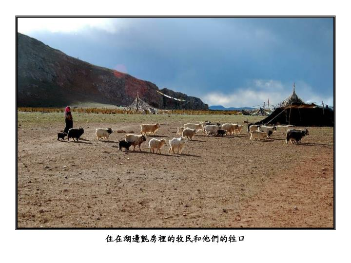 住在湖邊氈房裡的牧民和他們的牲口