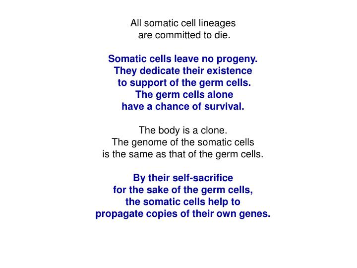 All somatic cell lineages