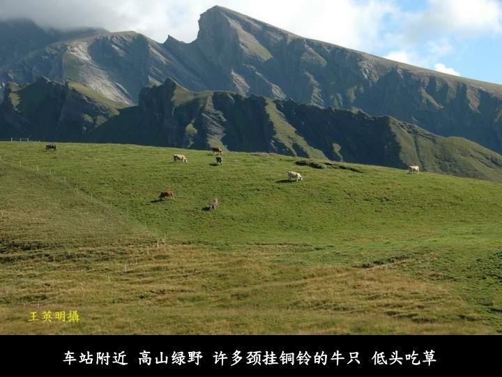 车站附近 高山绿野 许多颈挂铜铃的牛只 低头吃草