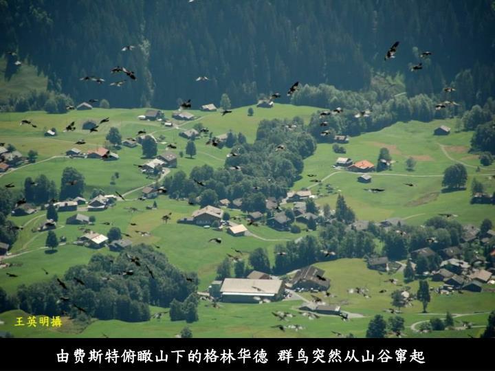 由费斯特俯瞰山下的格林华德 群鸟突然从山谷窜起