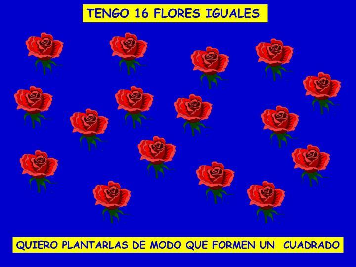 TENGO 16 FLORES IGUALES