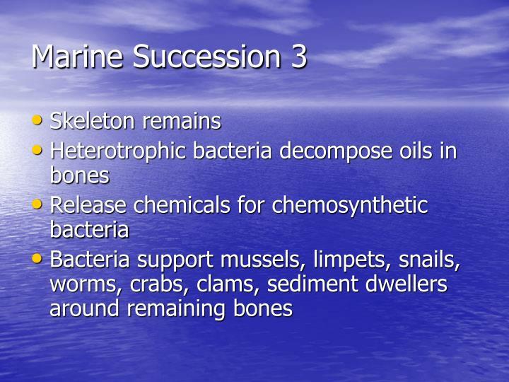 Marine Succession 3