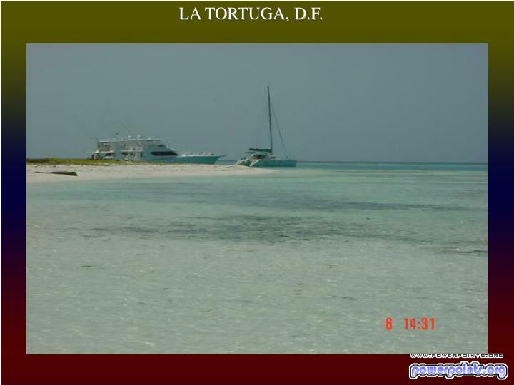 LA TORTUGA, D.F.