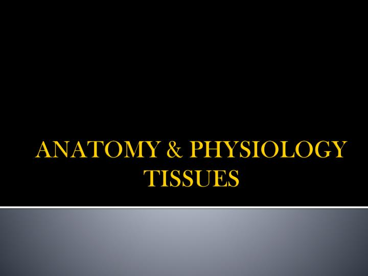 Anatomy physiology tissues