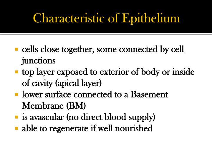 Characteristic of Epithelium