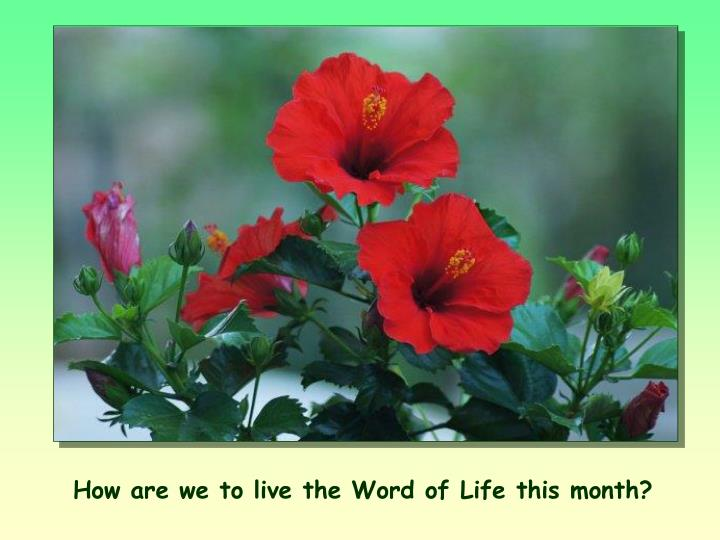How are we to live the Word of Life this month?