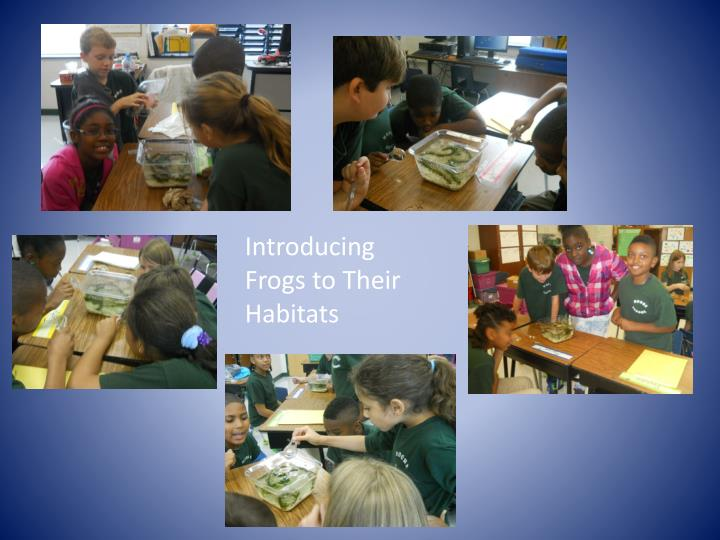 Introducing Frogs to Their Habitats