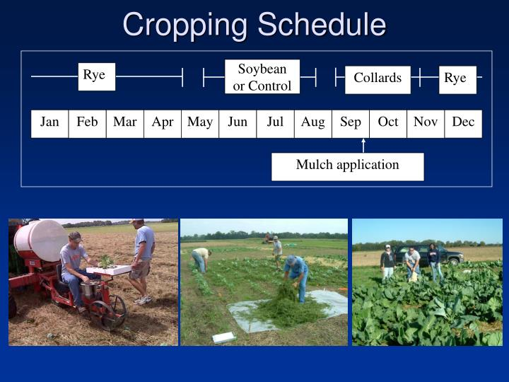 Cropping Schedule