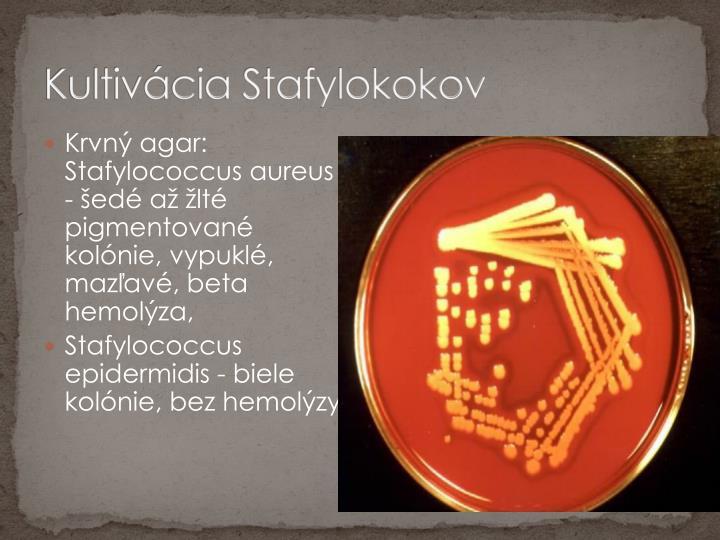 Kultivácia Stafylokokov