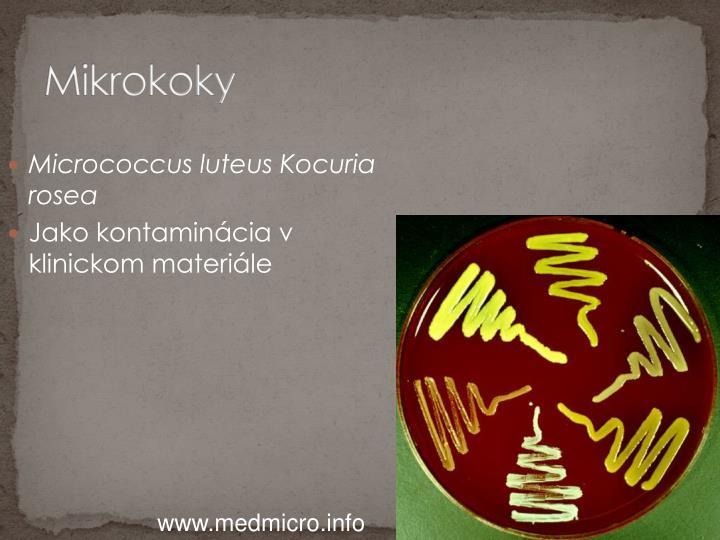 Mikrokoky