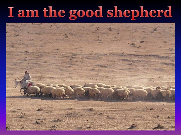 I am the good shepherd