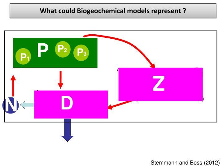 What could Biogeochemical models represent ?