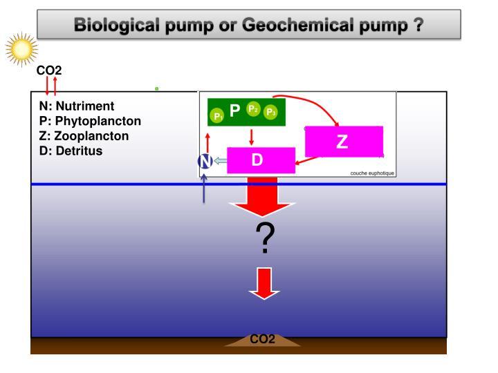 Biological pump or Geochemical pump ?