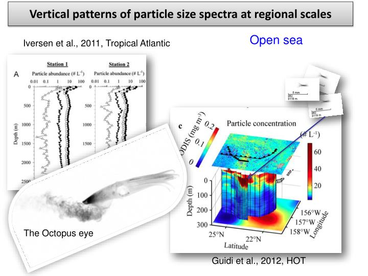 Vertical patterns of particle size spectra at regional scales