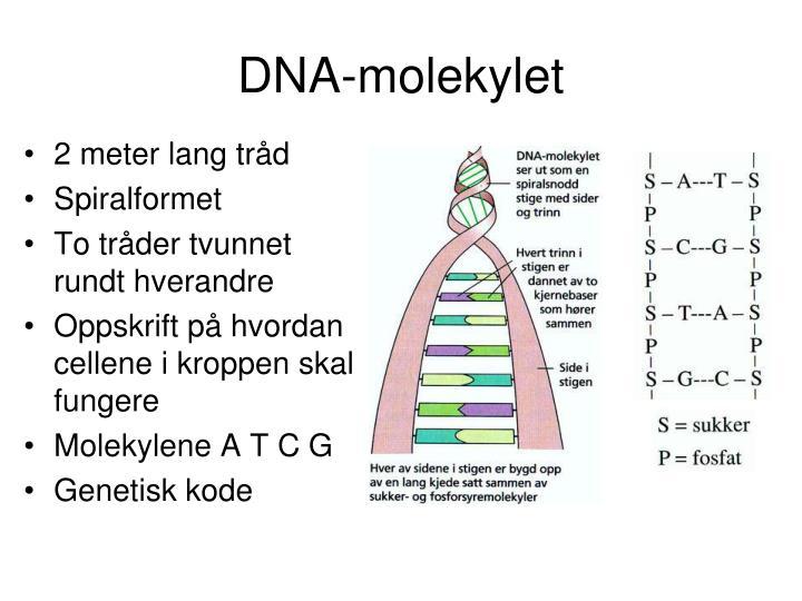 DNA-molekylet
