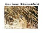 lielais dumpis botaurus stellaris