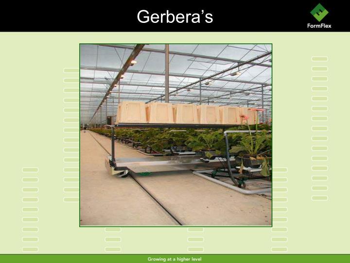 Gerbera's