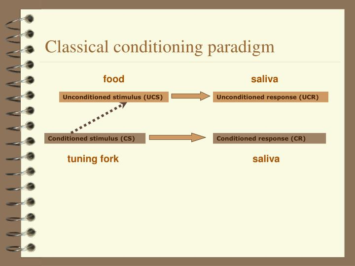 Classical conditioning paradigm