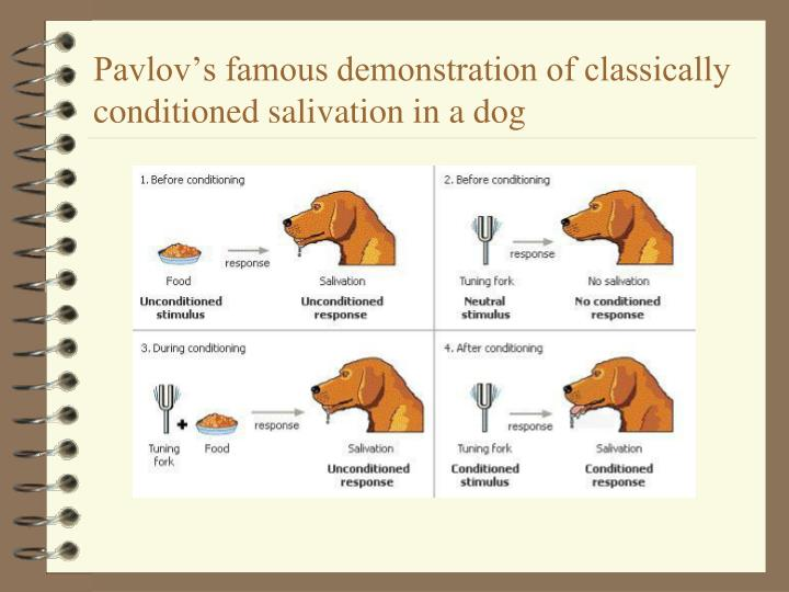 Pavlov's famous demonstration of classically conditioned salivation in a dog