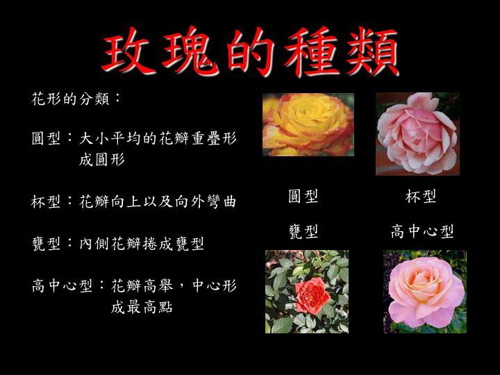 玫瑰的種類