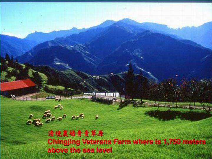 清境農場青青草原