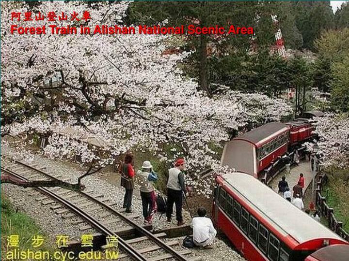 阿里山登山火車