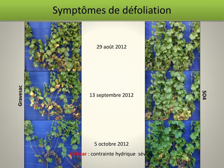 Symptômes de défoliation