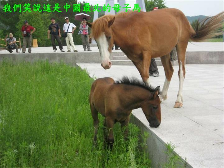 我們笑說這是中國最北的母子馬