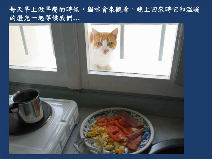 每天早上做早餐的時候,貓咪會來觀看,晚上回來時它和溫暖的燈光一起等候我們