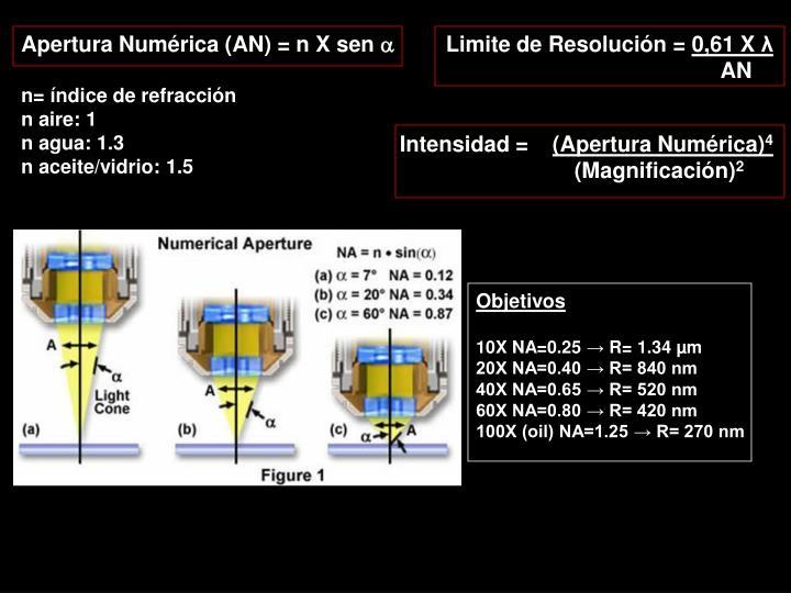 Apertura Numérica (AN)