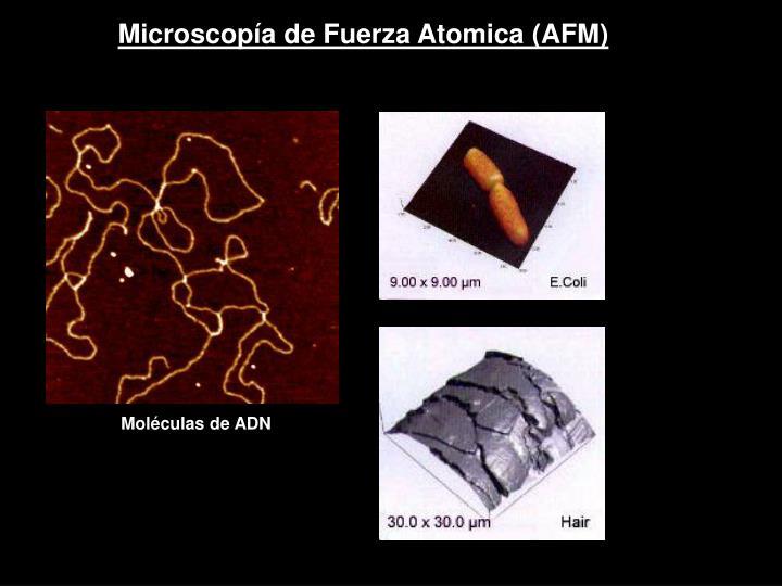Microscopía de Fuerza Atomica (AFM)