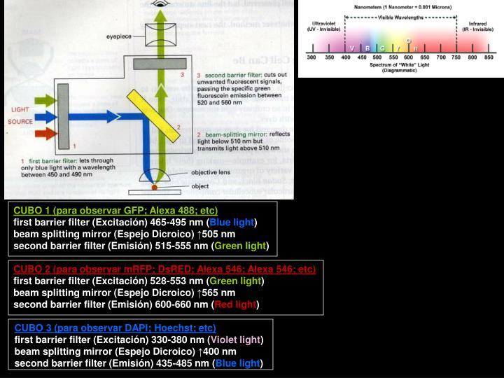 CUBO 1 (para observar GFP; Alexa 488; etc)