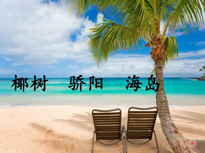 椰树  骄阳  海岛