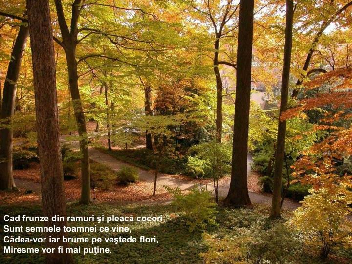 Cad frunze din ramuri şi pleacă cocori